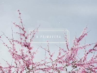 a primaveira   ☼  rose light design flower spring