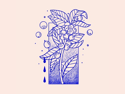 Salvadoran Coffee socialmedia visual art visual design brand identity design illustrator graphic design illustration