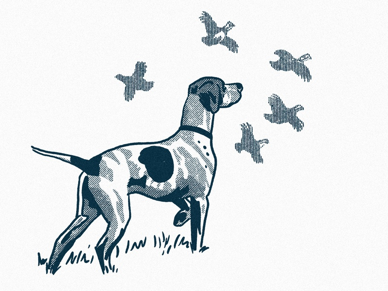Pointer procreate ipad texture engraving line art illustration pheasant bird dog hunting dog pointer