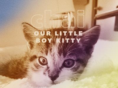 Chai kitty kitten cat chai