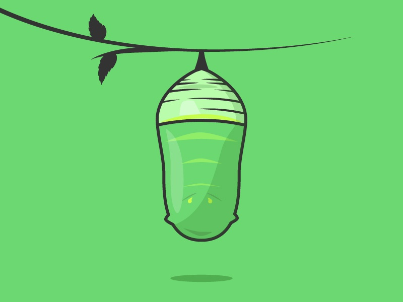 Monarch Cocoon nature caterpillar monarch cocoon butterfly simple illustrator flat 2d illustration vector