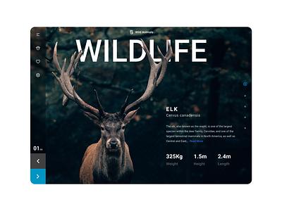 Wildlife Web Design nature uidesign desktop wildlife web-design web design ui