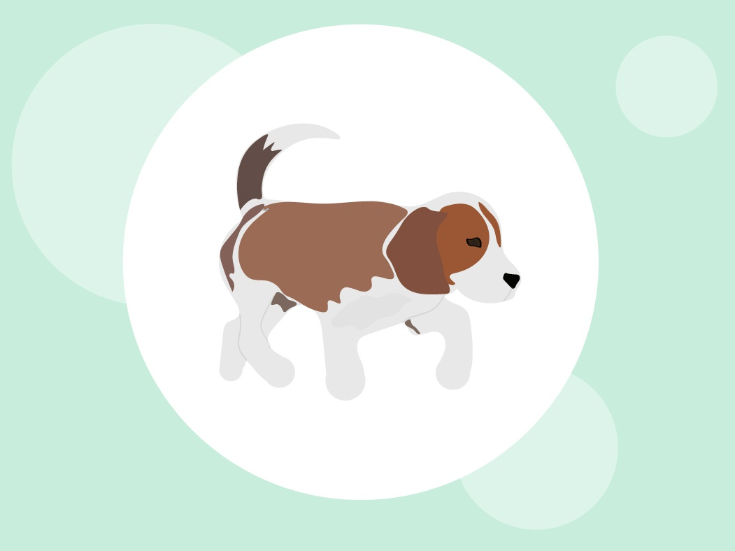 Dog Vector vectorartwork vectorart dog logo flat icon illustration dog vector