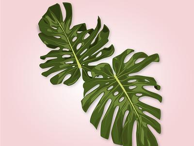 monstera deliciosa green natureindoors nature plant monstera monstera deliciosa drawing draw minimal vector illustration flat design
