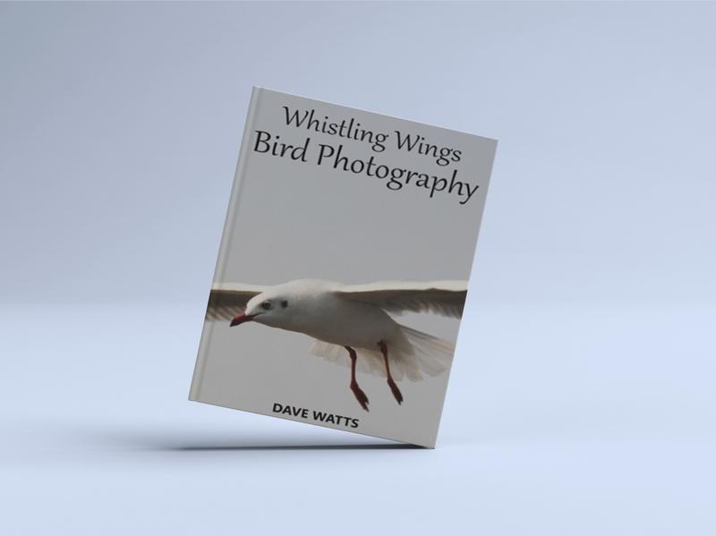 Book cover Design graphic design publication design book cover photography