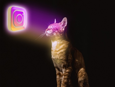 Cat with Instagram Lights photo editing illustration abstract design poster wallpaper design wallpaper poster design background design background