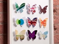 Papillons Graphiques: The Graphical Butterfly Collection
