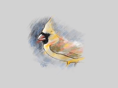 Tweet, tweet, it's a bird bird illustration drawing