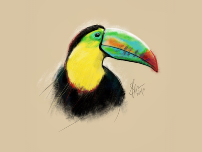 Toucan do it! digitalart applepencil ipadpro illustration drawing toucan