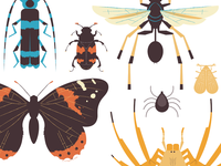Insect Print Series 2