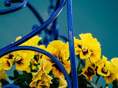 Annapolis - Landscape flowers yellow blue landscapes art photography lightroom