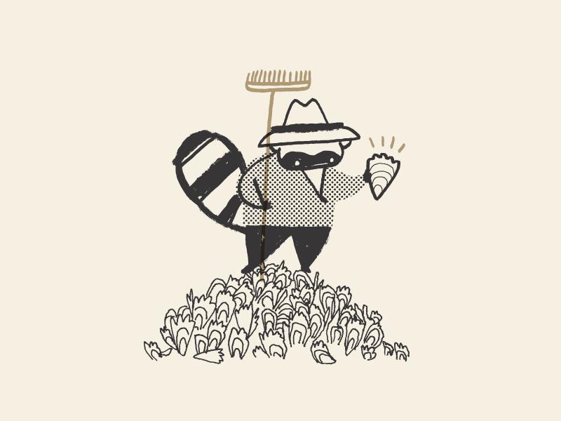 Raccoon harvester oyster raccoon