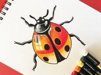 Ladybird with Oil Pastel Shading