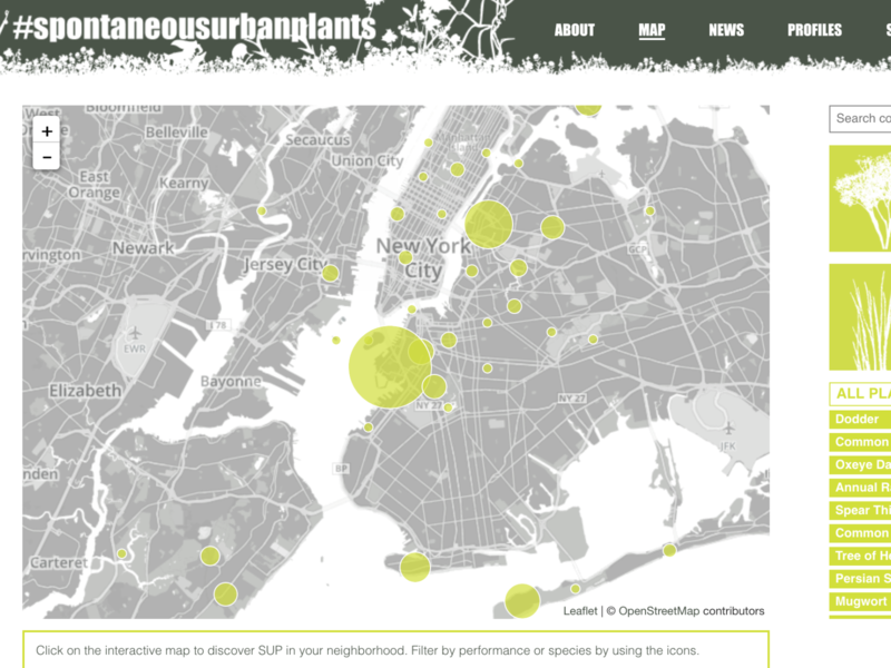 Spontaneous Urban Plants Website & Mapping Project mapping data visualization ui web
