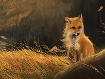 Beyond Fox Valley fox windy nature illustration character design grass