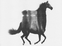 Wild Horses - 04