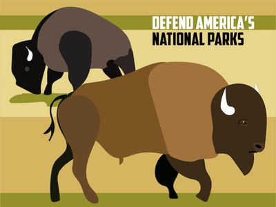 Defend National Parks national parks bison