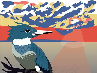 Kingfisher kingfisher birds
