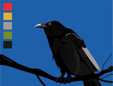 Raven raven birds