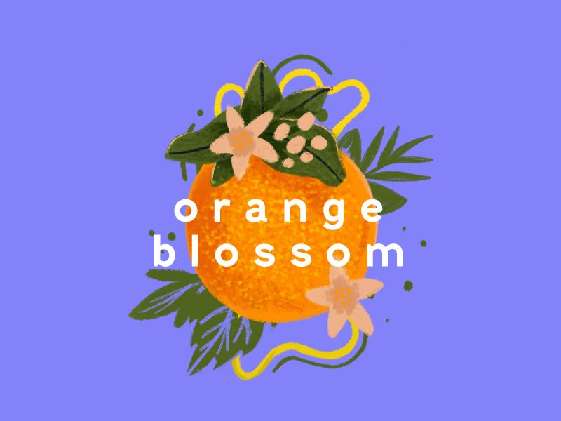 Orange Blossom Illustration design orange blossom orange illustration