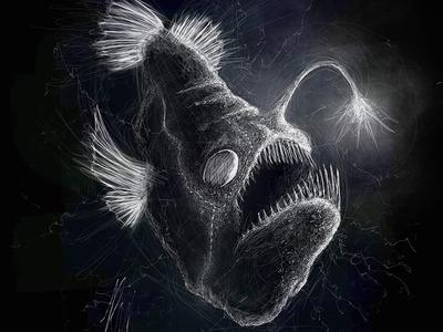 Angler Fish | Black Ocean Collection black angler fish ocean sketch anglerfish illustration