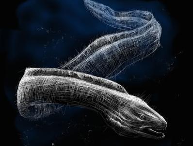Moray Eel | Black Ocean Collection eel moray sketch ocean illustration black