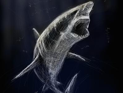 Shark | Black Ocean Collection shark sketch ocean illustration black
