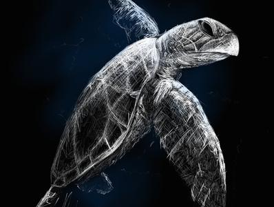 Turtle | Black Ocean Collection turtle sketch ocean illustration black
