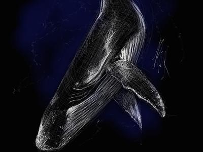 Whale | Black Ocean Collection whale sketch ocean illustration black