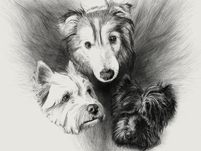 Fur baby commission corel painter huion digitalart sketch illustration portraits dogs drawing