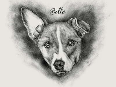 Dog Illustration: Bella sketch drawing petillustration petdrawing dog dogart animaldrawing dogdrawing illustration