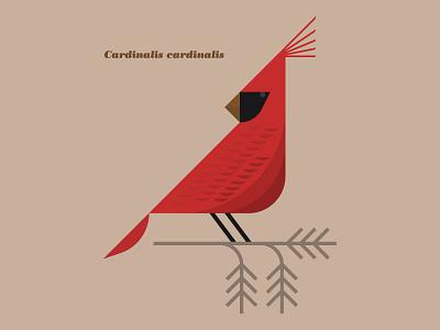 Cardinalis cardinalis ohio north carolina state bird feathers branch nature tree illustration bird cardinal