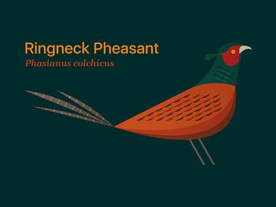 Pheasant midwest typography editorial illustration wing game bird pheasant bird state bird south dakota