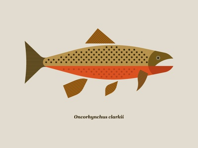 Cutthroat trout illustration montana fishing cutthroat trout cutthroat trout fish