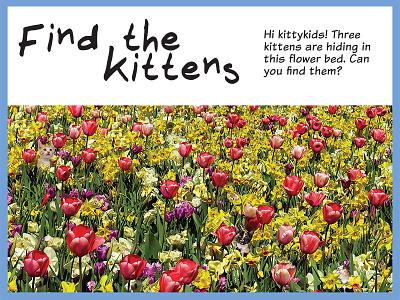 Find the Kittens green flowers animals nature landscape photo manipulation photomontage collage photoshop kittens cats activity book calendar workbook editorial design design