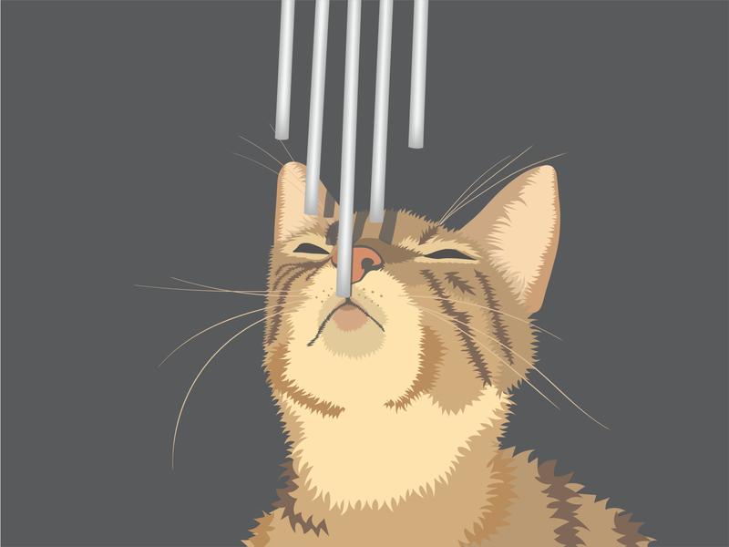 Serenity vector illustration vector artwork vector art vector illustrator illustration digital art illustration digital illustration artist illustration art illustration