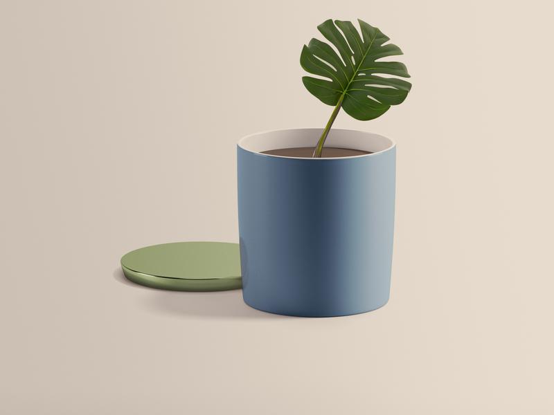 Plante - Vert - pot pot