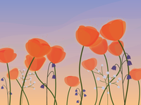 Magic Field nature illustration twilight dawn sunset field flowers plant design vector illustration vector illustration