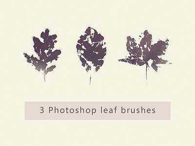 3 Photoshop Leaf Brushes fall leaf autumn photoshop brush
