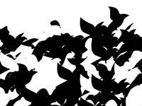 Flocking Chaos