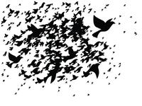 Flocking Chaos - Part 2