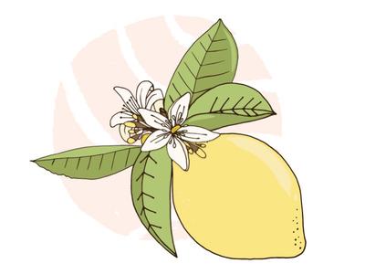 Lemon creative market vector summer lemon illustration illustrator adobe sketch