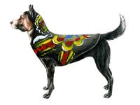 Dalecarlian Dog - Shepherd