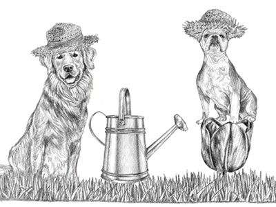 Illustration for Ralph Lauren's Spring Sale spring ralph lauren marketing illustration graphite drawing dogs advertising