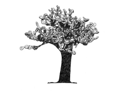 Galapagos Illustrations - Opuntia Cactus opuntia cactus scientific illustration realism graphite drawing illustration galapagos cactus