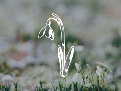 Snowdrop Vector Illustration