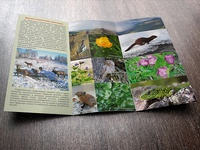 Tri fold Brochure for Tigirek