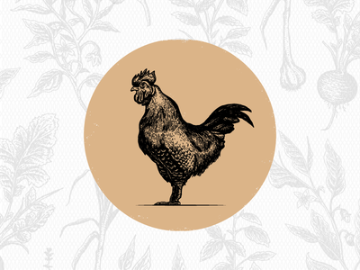 Farm to Table Illustrations lettuce herb garlic onion pepper beets basil chicken rooster