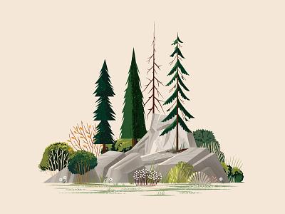 Woodsy Scene grass scenic leaf pine boulder flower plants rock outdoors tree nature