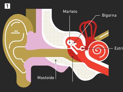Airplane Ear inner infographic ear